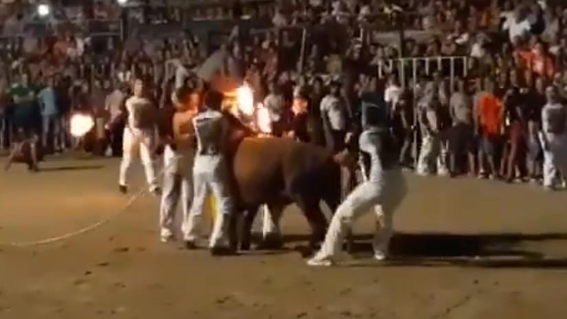 """""""Humillación y terror"""": Indignación en la Red por el sufrimiento de un toro con los cuernos en llamas en España (VIDEO)"""