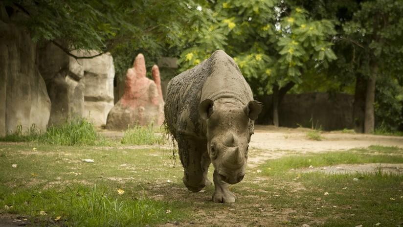 FOTO: Visitantes de un zoo en Francia escriben sus nombres en el lomo de un rinoceronte