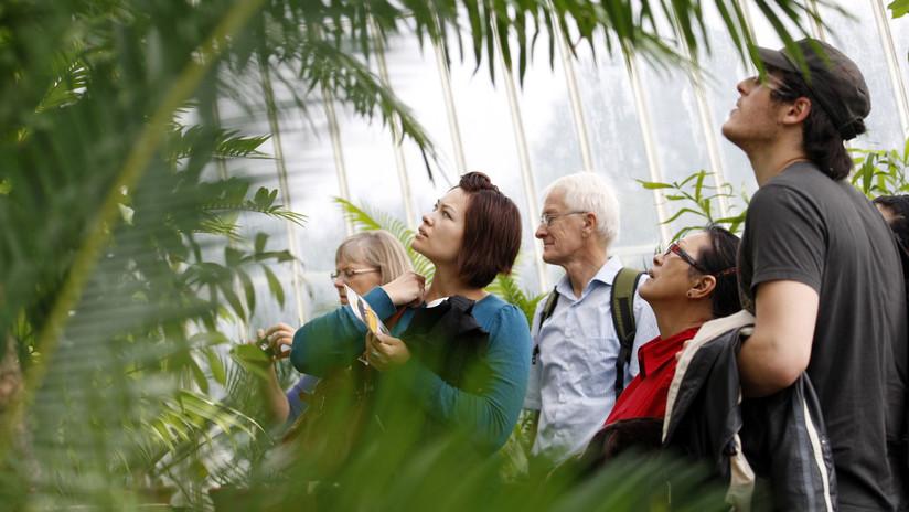 Una planta 'jurásica' se reproduce en Reino Unido después de 60 millones de años (FOTO)