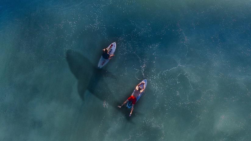 Surfea sin saberlo sobre tiburones blancos... ¡y se cae al agua — Sobrecogedor
