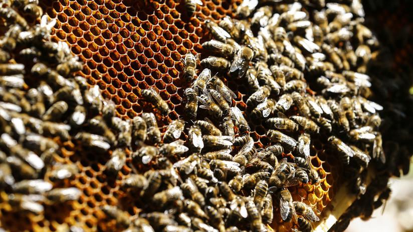 VIDEO: Un enjambre de abejas se adhiere al trasero de un joven como si fuera su colmena