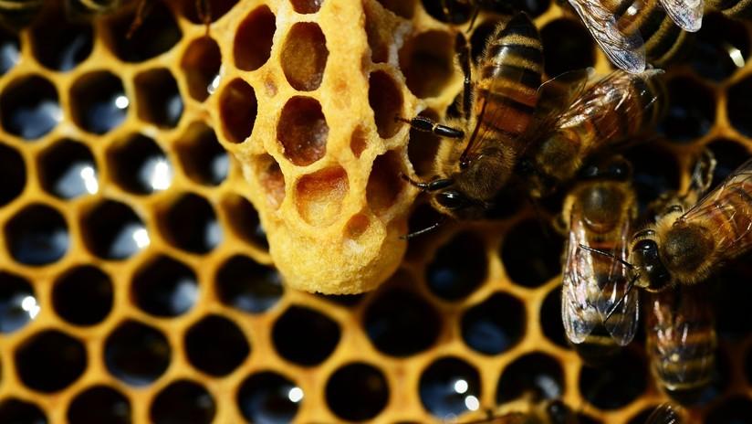 Las abejas obreras matan a su reina si copula con dos machos 5d63cd9c08f3d9d1248b4571