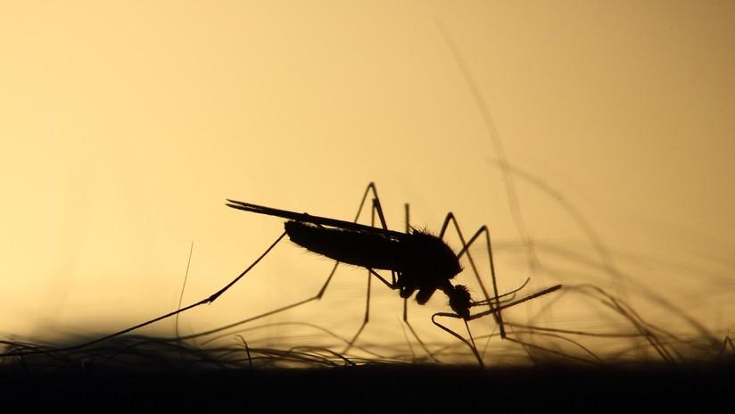 Una picadura de mosquito desencadena un paro cardíaco de tres minutos a una mujer
