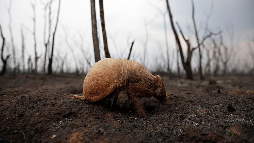 Erradicando la vida: las graves consecuencias de los incendios forestales en la Amazonía