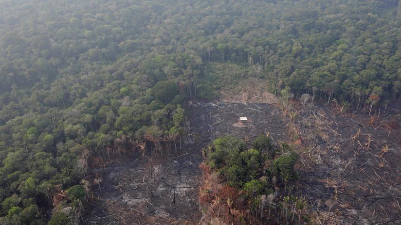 ¿Por qué se quema la Amazonia?