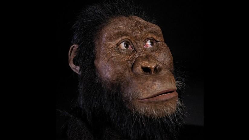 FOTOS: Hallan el cráneo perfectamente preservado de un homínido que vivió hace 3,8 millones de años y reconstruyen su rostro