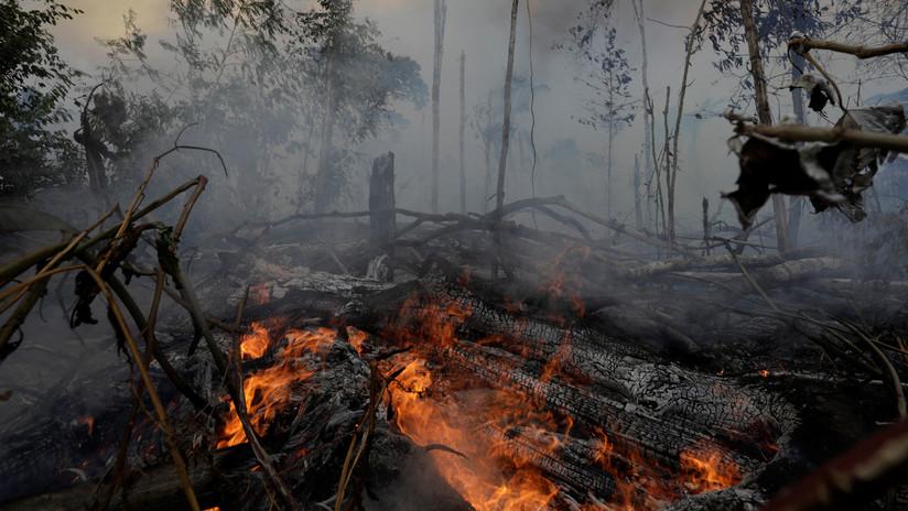 The Intercept: Uno de los principales donantes de Trump estaría detrás de la deforestación de Amazonía