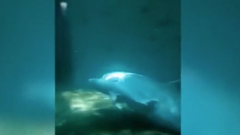 Muere un bebé de delfín de 9 días durante un espectáculo acuático en Bulgaria