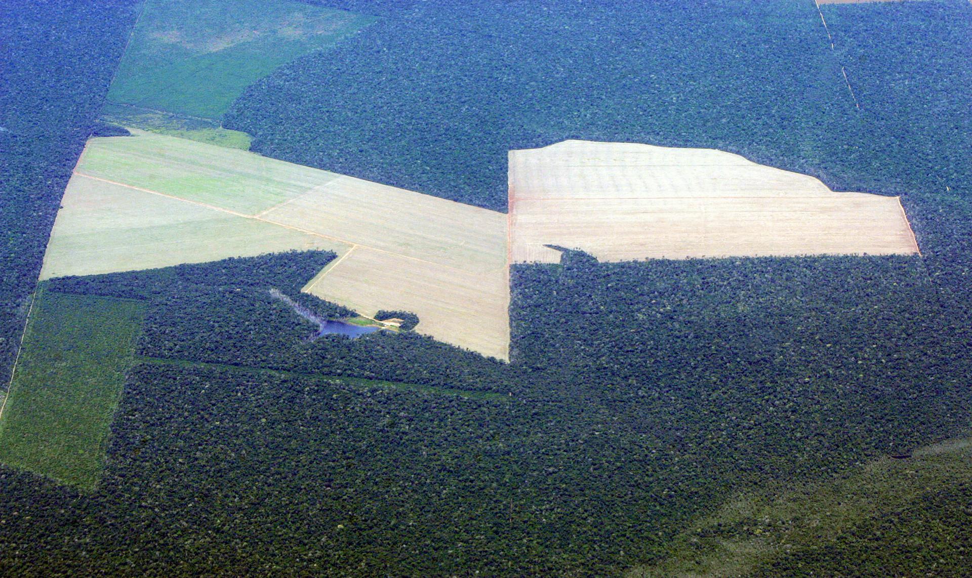 5d66cdd608f3d993248b4612 - ¿Por qué se quema la Amazonia?