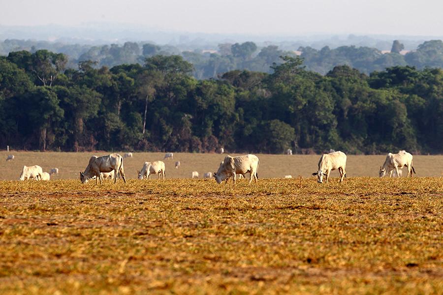 5d66ce25e9180f52118b4568 - ¿Por qué se quema la Amazonia?