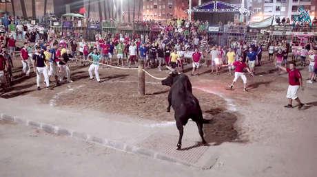 Concurso de 'emboladores de toros' en La Vall d'Uixó (Valencia, España). 10 de agosto de 2019