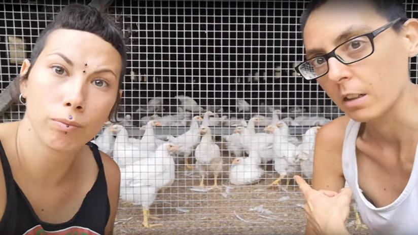 """El 'santuario animal' español que se volvió viral tras separar a los gallos de las gallinas para evitar """"que las violaran"""""""