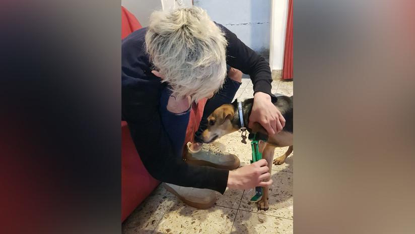 VIDEO: Un argentino fabrica prótesis para mascotas amputadas con una impresora 3D (y las regala)