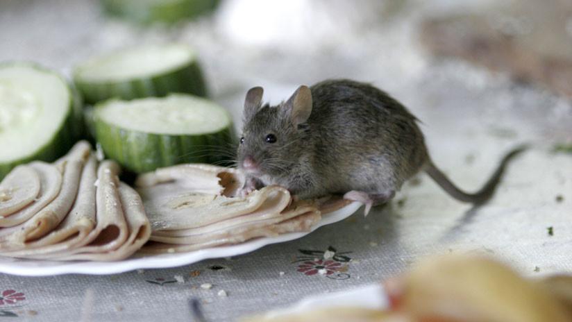 VIDEO: Un ratón 'se suicida' en un restaurante de comida rápida de EE.UU. ante decenas de clientes
