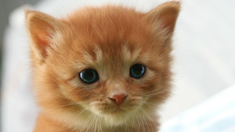 VIDEO: Dos hombres lo dejan todo y paran el tráfico para salvar a un gatito