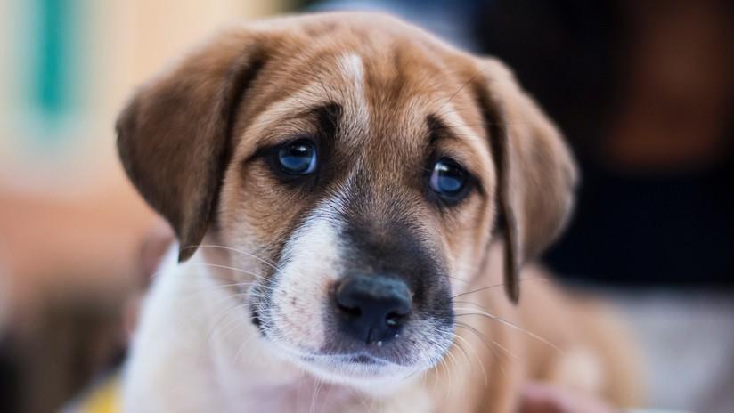"""Una mujer apaga un cigarro en los ojos de un cachorro y lo graba para los """"fetichistas del maltrato animal"""""""