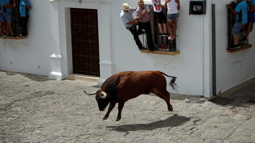 VIDEO: Un toro aterrorizado intenta saltar por la ventana de una casa durante un encierro en España