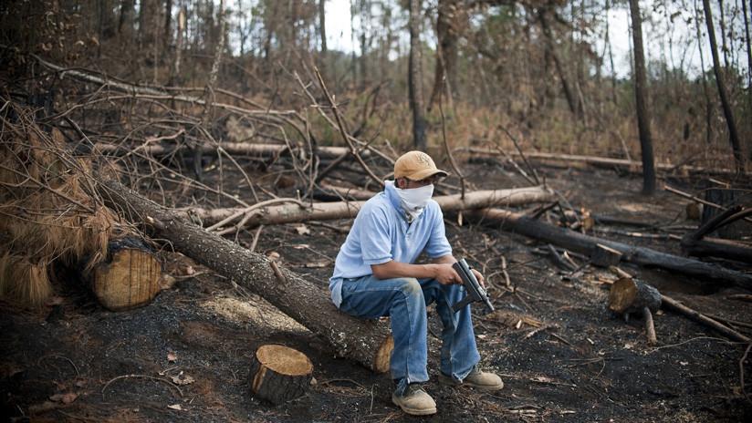 El terror de 'Los Tena': cómo el tráfico ilegal de madera aumentó el desplazamiento en el estado de Michoacán