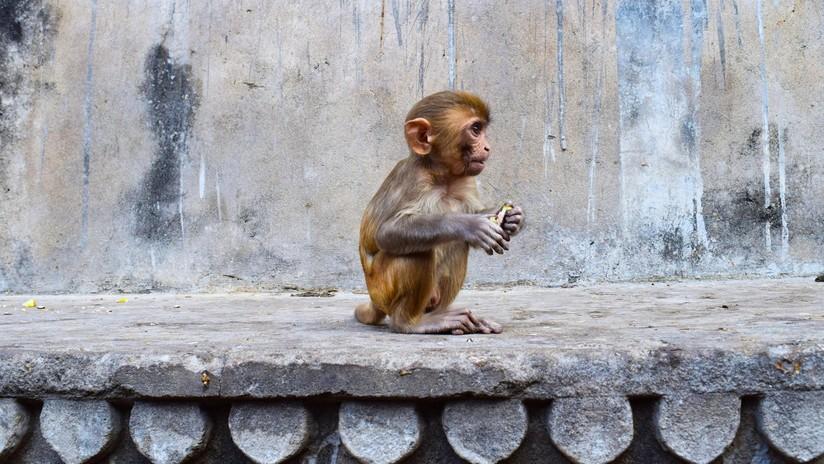Desacreditan en monos y humanos uno de los elementos fundamentales de la economía