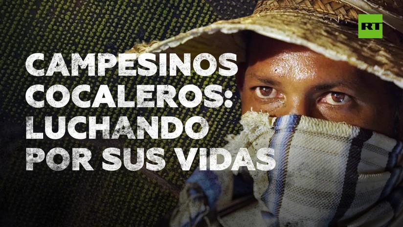 Coca: la guerra por la erradicación
