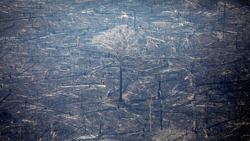 Estudio: Cada año el mundo pierde bosques equivalentes al tamaño de Gran Bretaña