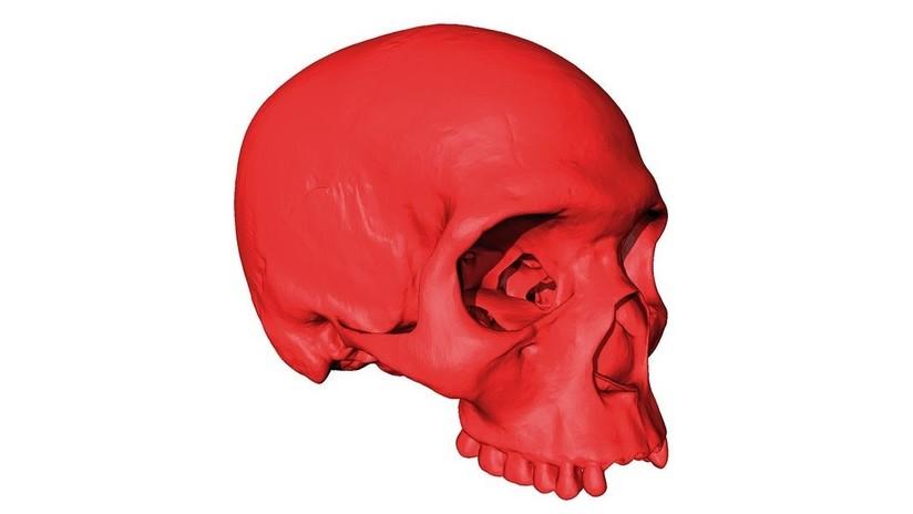 FOTO: Reconstruyen el cráneo del progenitor de nuestros contemporáneos que vivió hace 300.000 años