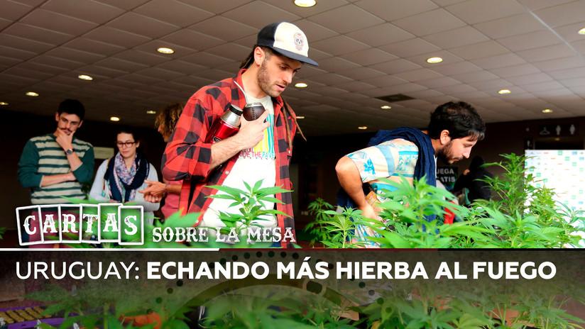 Echando más hierba al fuego: la polémica en torno a la legalización de la marihuana en Uruguay