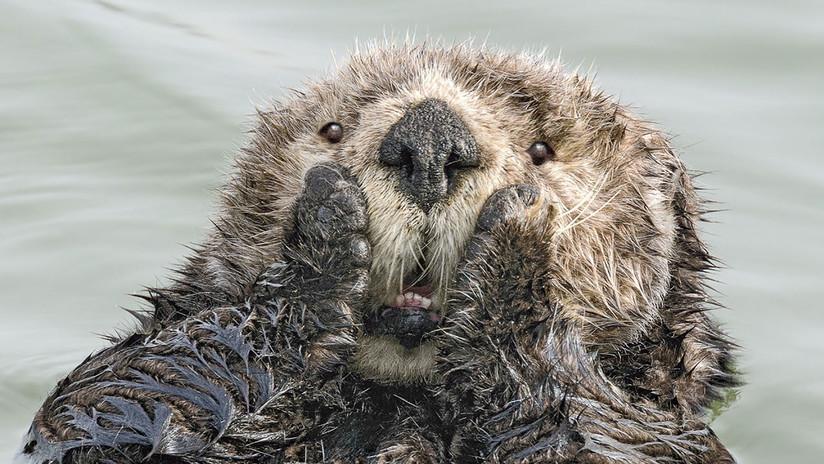 No intente contener la risa: Las mejores fotos cómicas de fauna salvaje de 2019