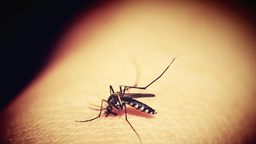 Pasa de estar completamente sano a tener muerte cerebral en 9 días por un raro virus transmitido por mosquitos