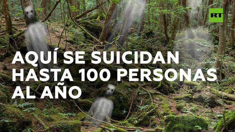 Aokigahara, 'bosque de suicidios' en Japón