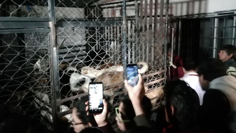 Detienen a una mujer en México que capturaba perros: pedía rescate o los congelaba presuntamente para vender la carne