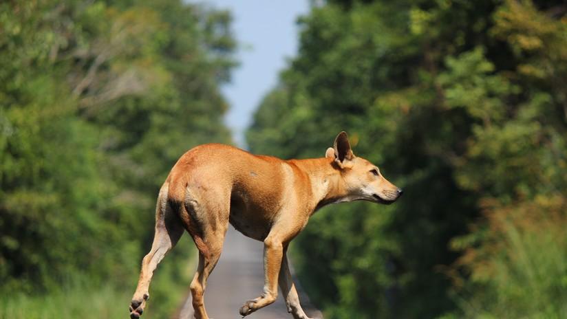 #Video Rescate de perro ocasiona carambola en el Edomex