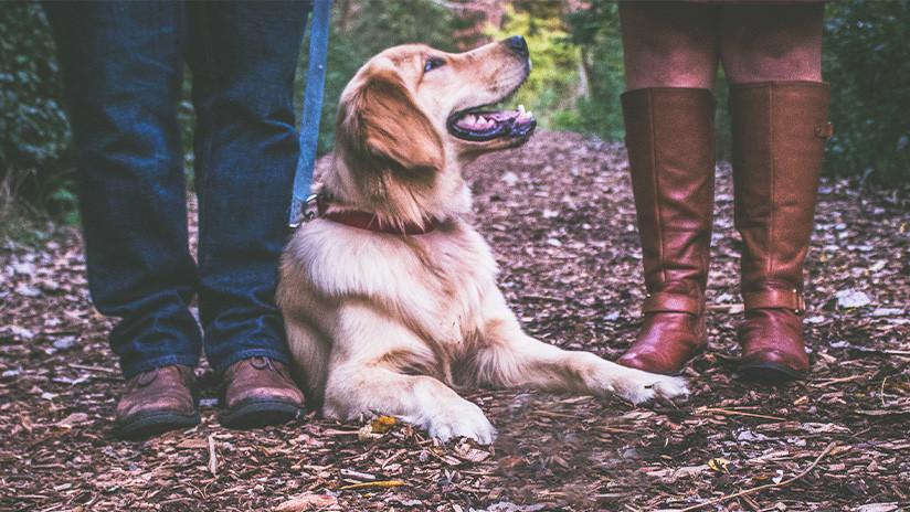 Los 'sabuesos' fueron sus amos: Una pareja de EE.UU. localiza a su perra tras 57 días de intensa búsqueda
