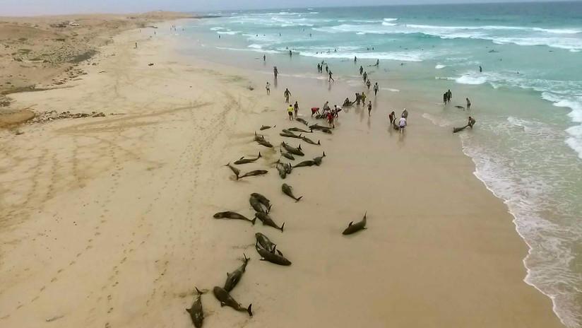 Más de 130 delfines mueren en una isla de África
