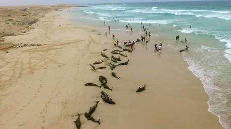 VIDEO: Más de 130 delfines mueren en una isla de África por causas desconocidas