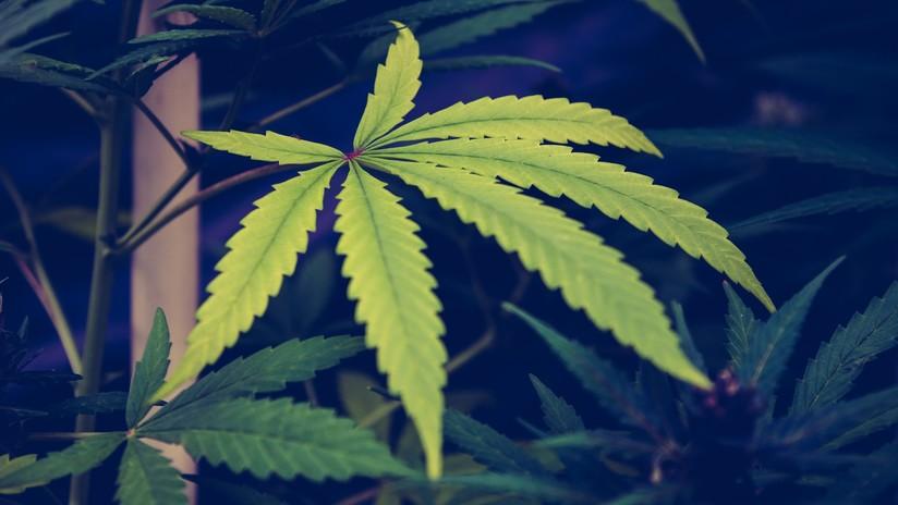 VIDEO: Un policía de EE.UU. devuelve una bolsa de marihuana a un conductor porque no la puede requisar