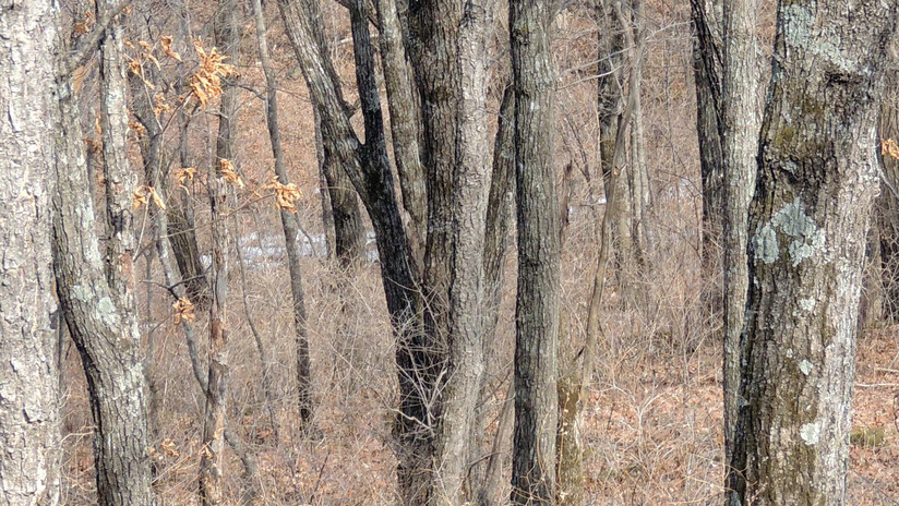 FOTO: Un parque nacional ruso publica una imagen de un leopardo 'invisible'