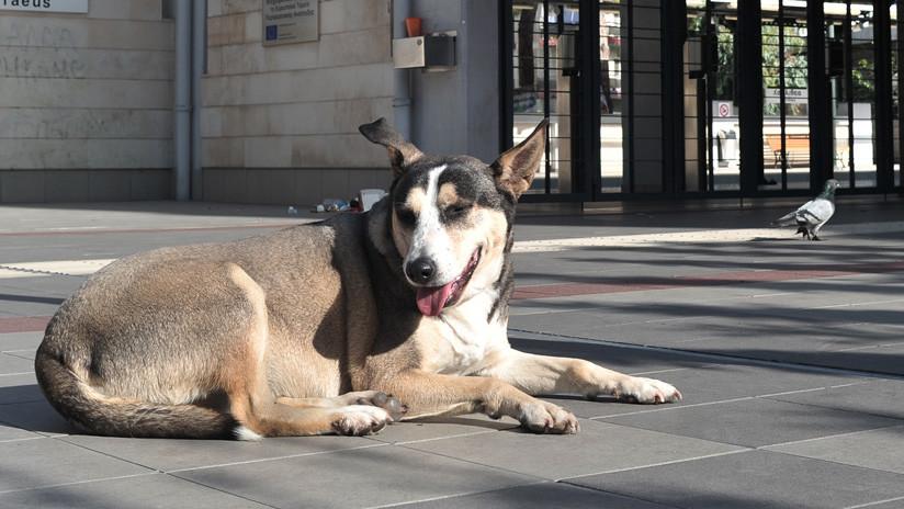 Un perro espera por un mes a su amo en el mismo sitio donde este se suicidó