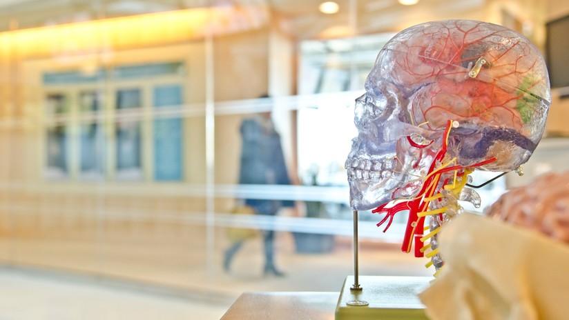 ¿La clave de nuestra evolución? El cráneo humano es el que más se acerca a la proporción áurea