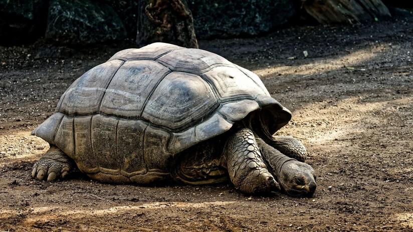 FOTO: Zoológico chino pega una canasta sobre una tortuga para que le lancen 'monedas de la suerte'