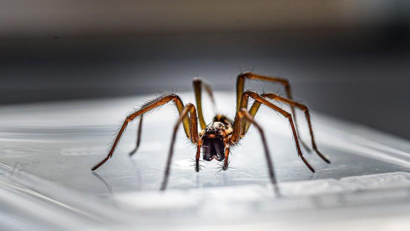 Se despierta con dolor y vértigo y horas después descubre una araña alojada en su oído