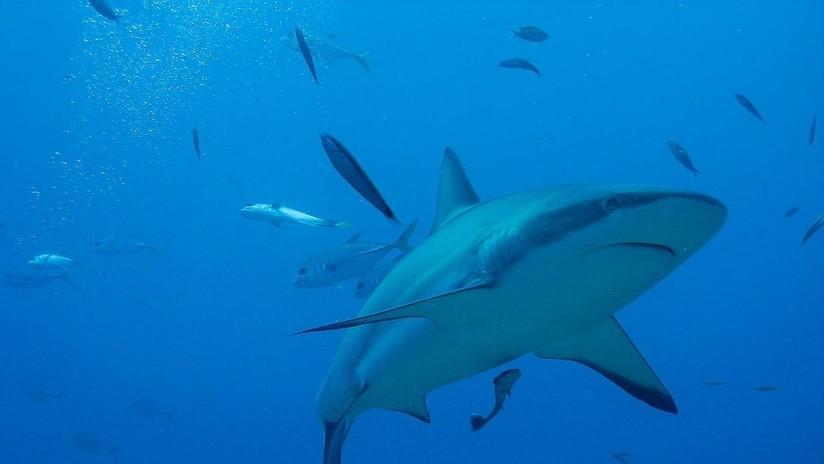 VIDEO: Un submarinista se salva después de luchar contra el ataque de un tiburón de 4,5 metros