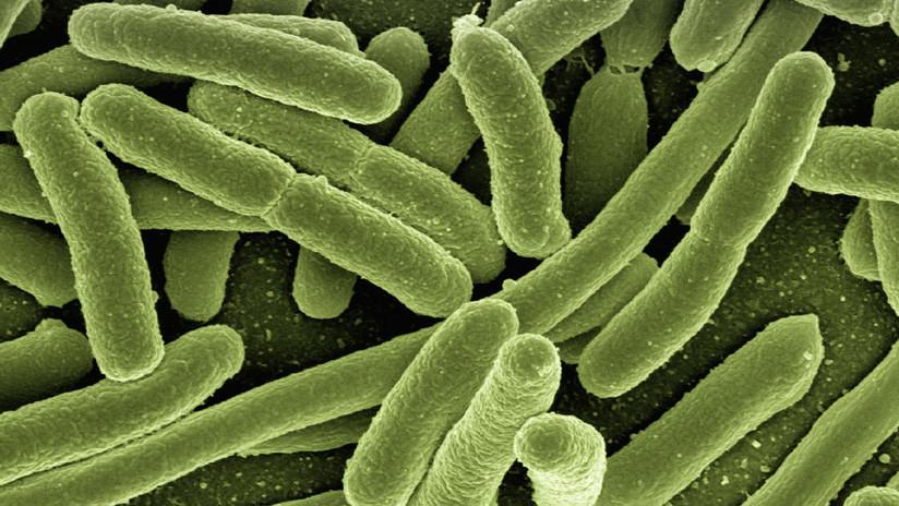 Descubren nuevo antibiótico gracias a inteligencia artificial