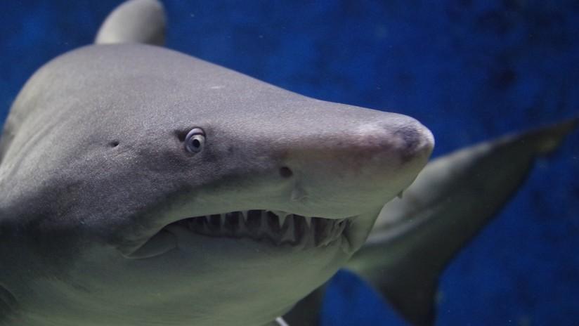 FOTO: Un niño de 8 años pesca un tiburón de 314 kilos