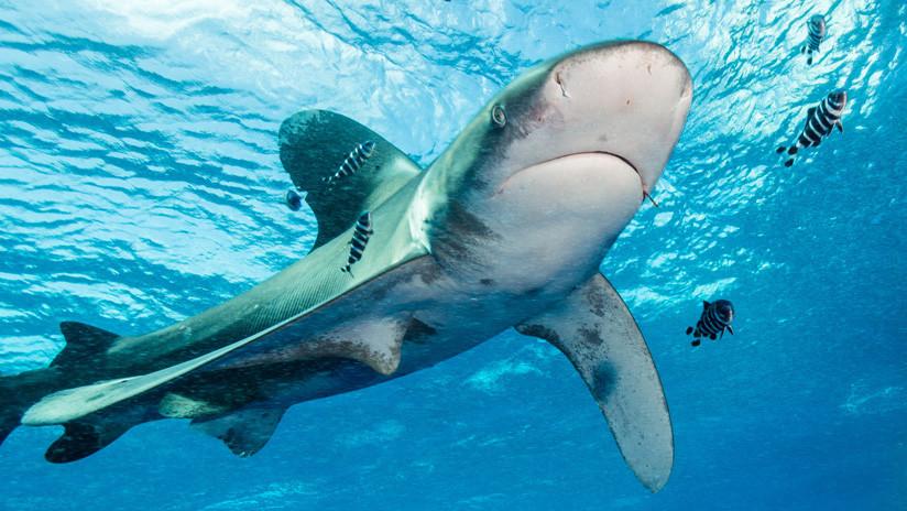 Un tiburón arranca las manos y un pecho a una turista frente a su familia