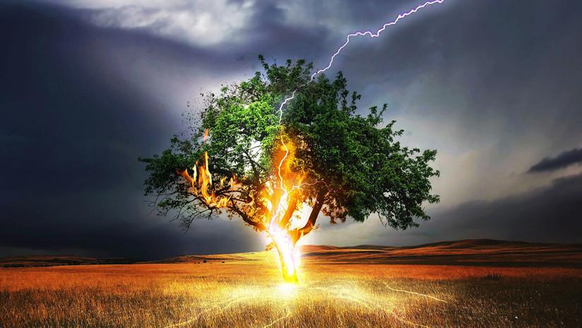 VIDEO: Un árbol arde desde el interior de su tronco tras ser golpeado por un rayo