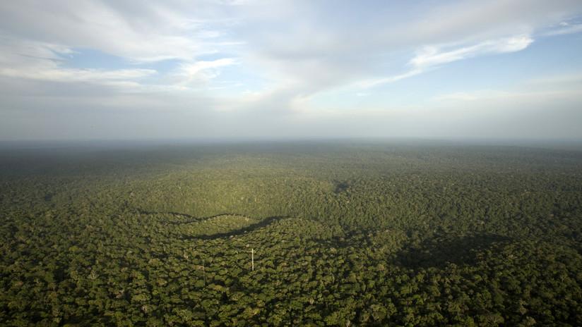 """Experta sobre la deforestación de la Amazonía: """"No son los pulmones del mundo, es una bomba de carbono"""""""