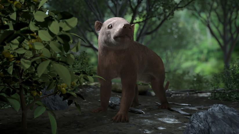 FOTOS: Muestran por primera vez cómo se desarrolló la vida durante el primer millón de años después de la extinción de los dinosaurios
