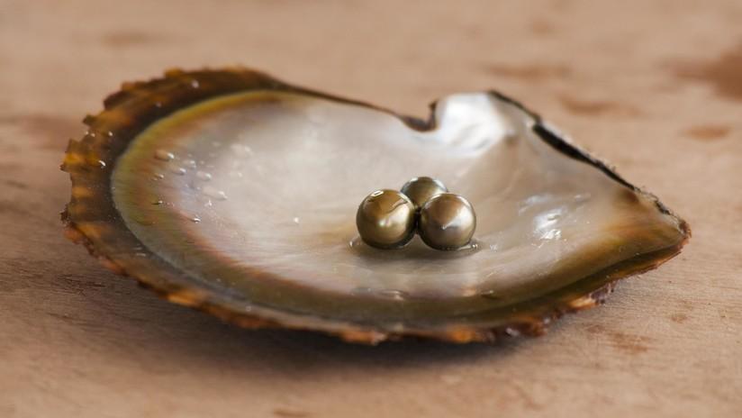 """""""Solo una vez en la vida"""": una pareja encuentra una perla dentro de una ostra mientras cena en un restaurante (FOTO)"""