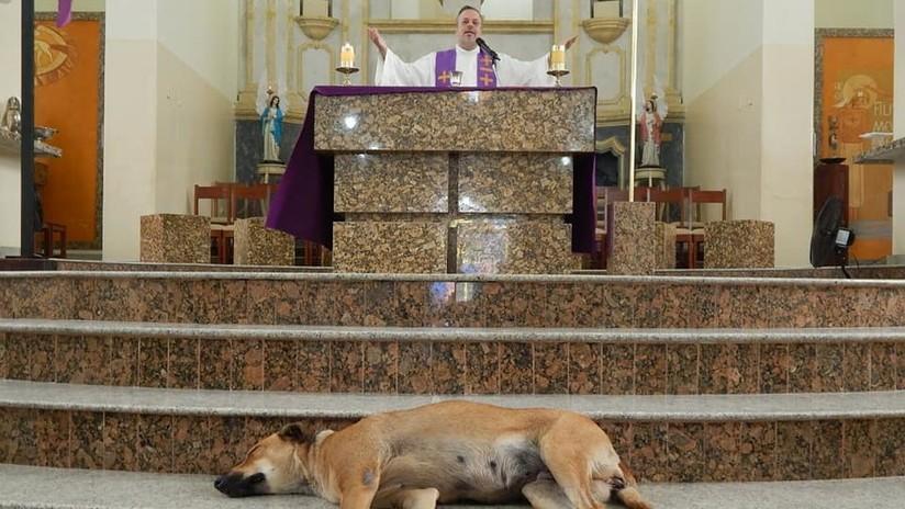 FOTOS: Un sacerdote brasileño hace misa con perros callejeros para buscarles nuevo hogar